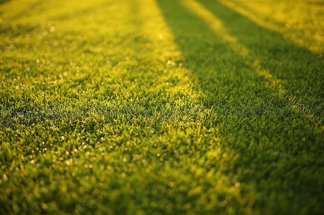 artificial-grass-adelaide