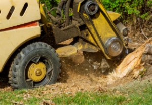 tree stump removal Sydney