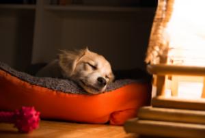 calming dog bed UK
